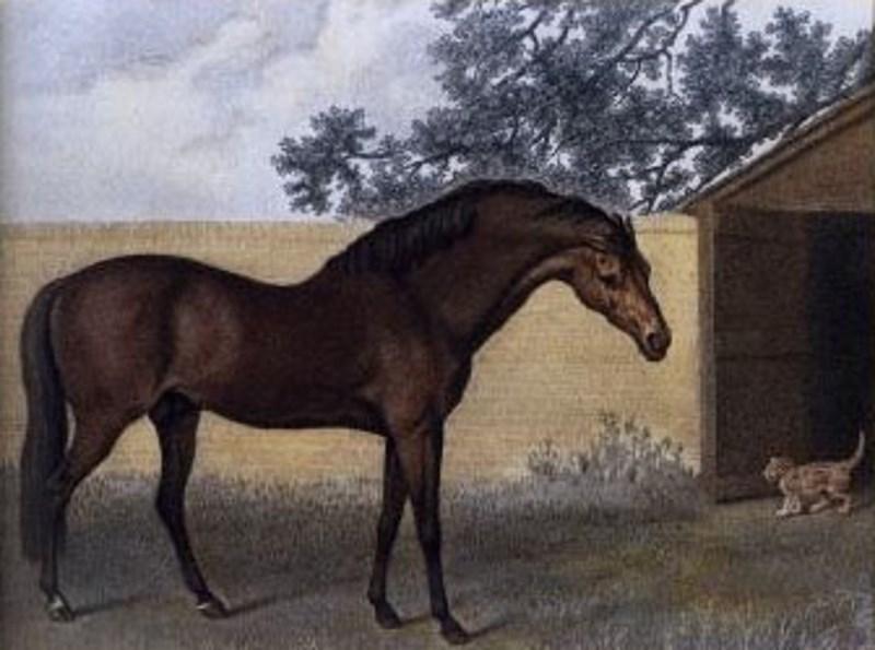 godolphin-arabian