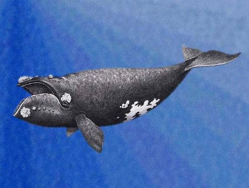 grote-oceaannoordkaper2