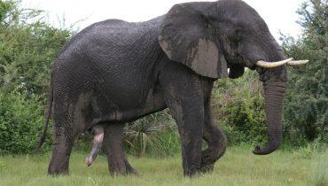 12 dieren met de langste draagtijd dierenfun - Kleine prieel ...