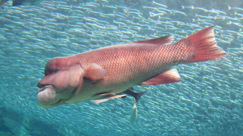 grote lul vis com