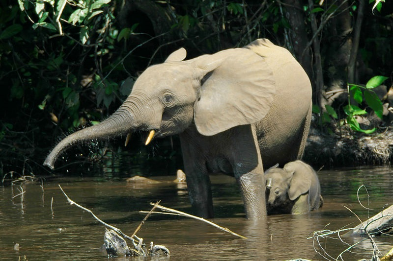 bosolifant1