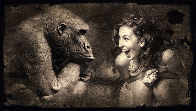 gorilla en mensen
