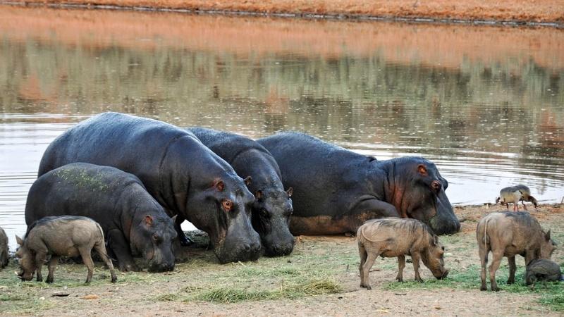 nijlpaard melk is niet roze