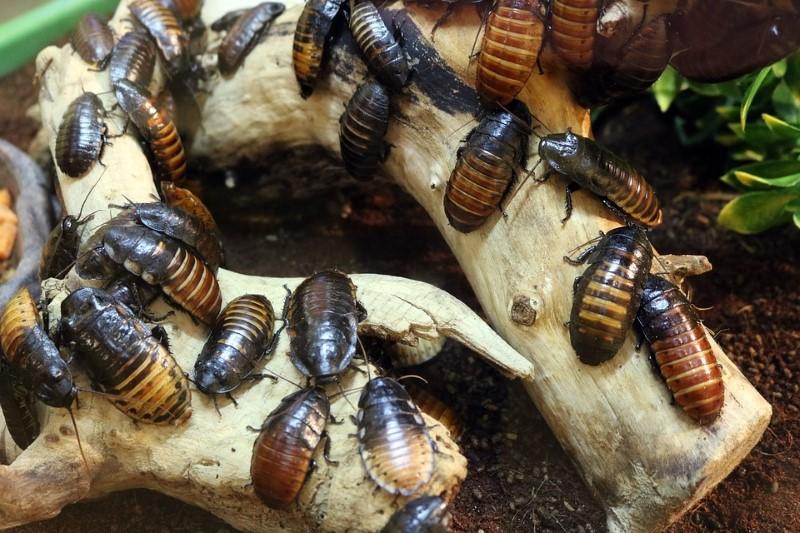 kakkerlakken eten alles