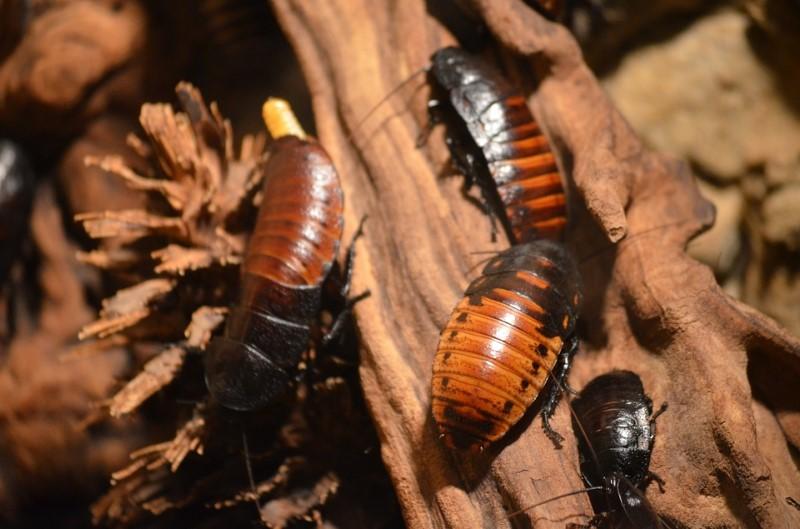 kakkerlakken overal ter wereld