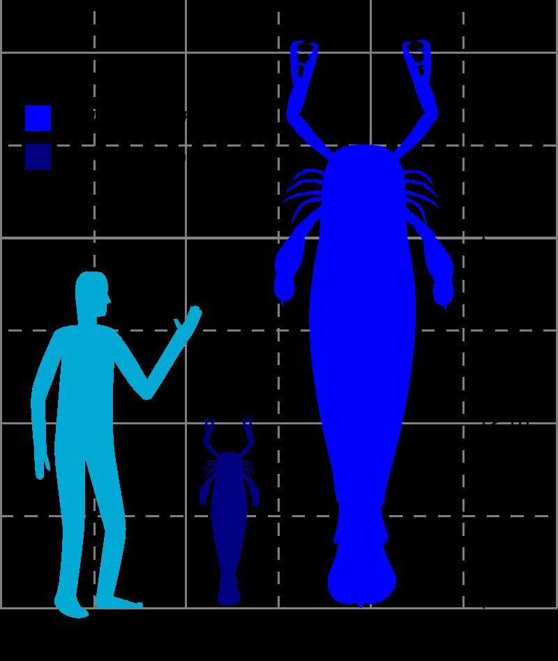 Jaekelopterus 2