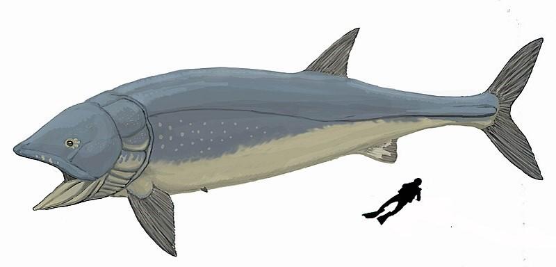 Leedsichthys2