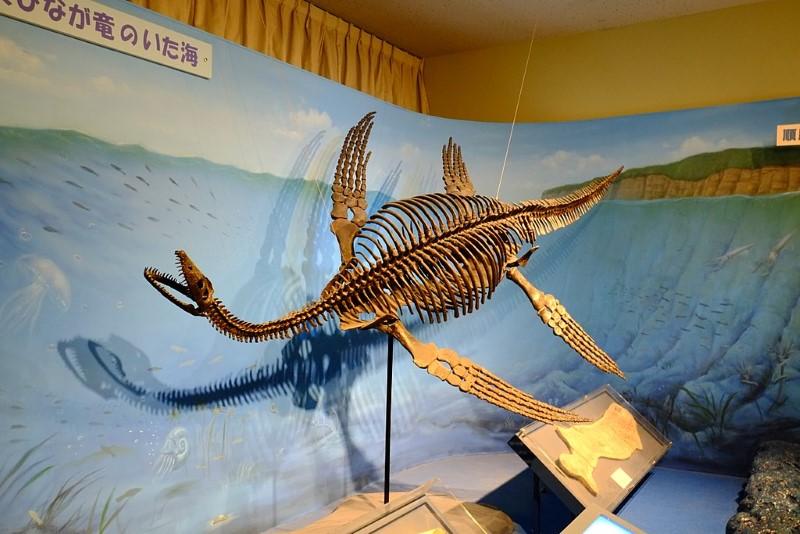 Plesiosaurus skelet