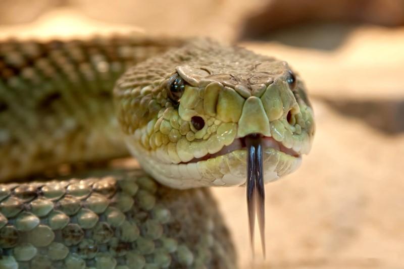 slangen tong