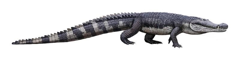 Deinosuchus 2