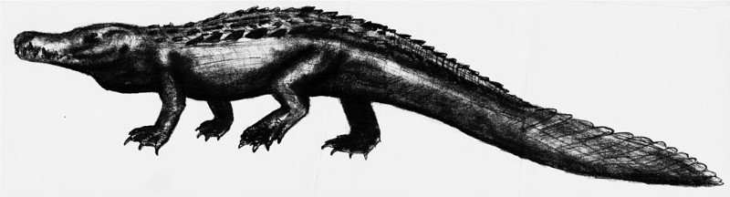 Purussaurus 2