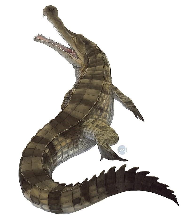Sarcosuchus imperator 2