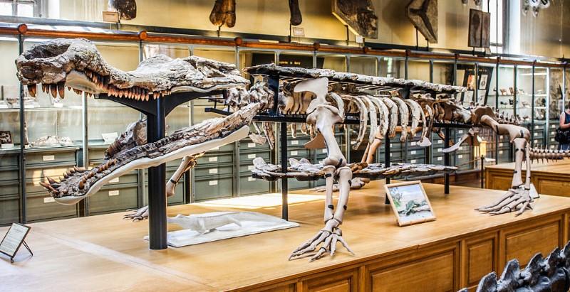 Sarcosuchus imperator skelet