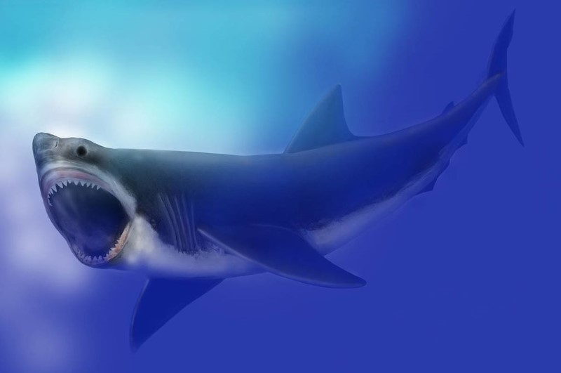 megalodon groot