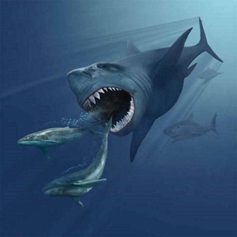 megalodon jaagt op dolfijnen