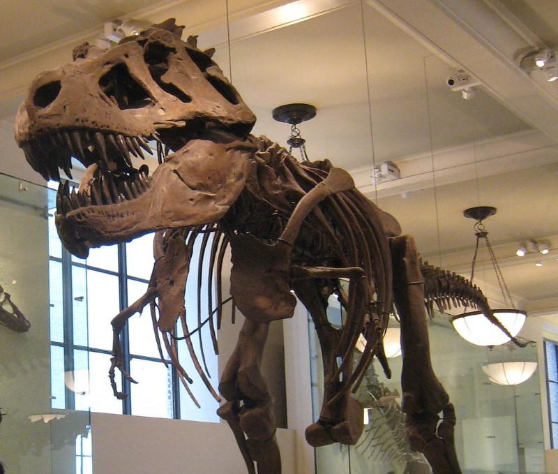 t rex skelet