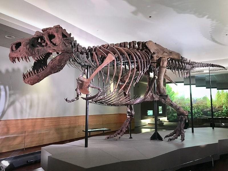 vrouwlijke t rex