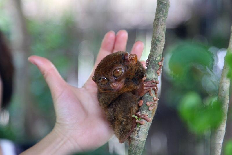 spookdiertje klein