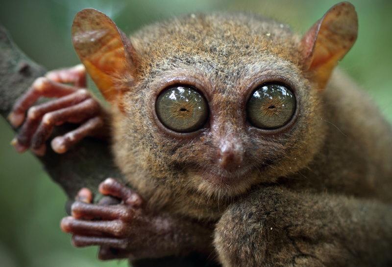 spookdiertjes grote ogen