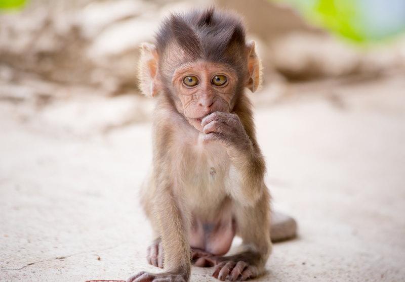 aap jong