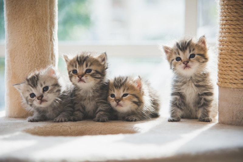 groep katten cluster