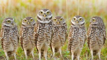 groep uilen parlement