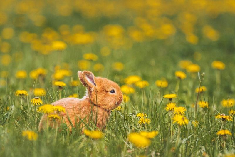 lamprei jong konijn