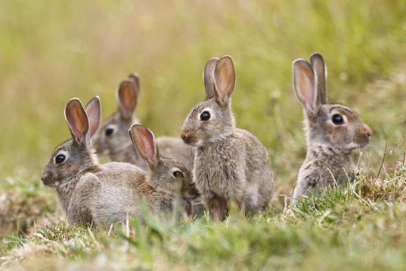 sprong konijnen