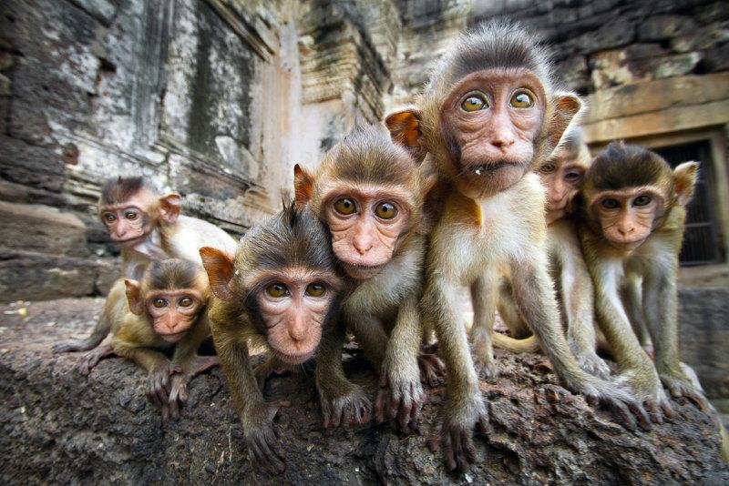 troep apen
