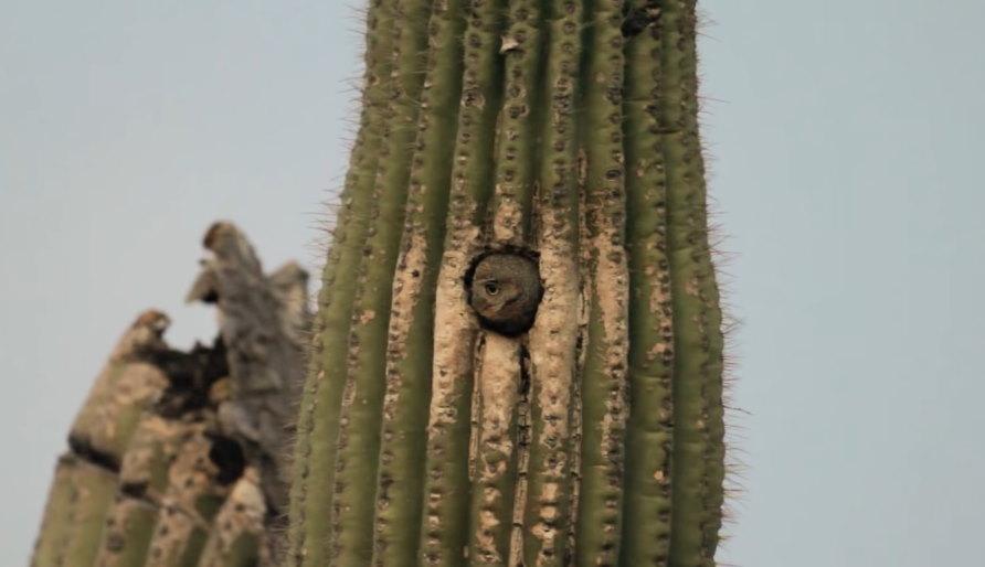 huisje van een cactusuil