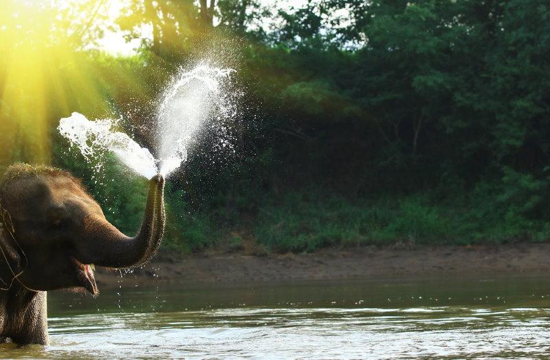 olifant sprayt water