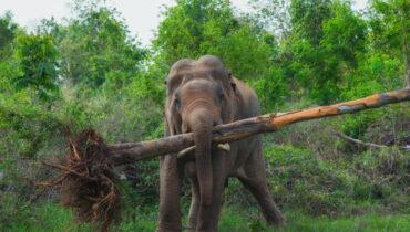 olifant tilt een boom