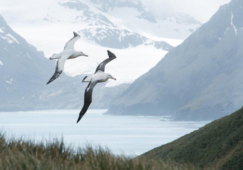 Grote Albatros 2