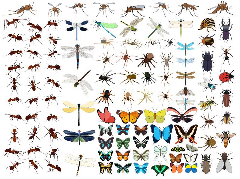 insect heeft 6 poten