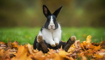 konijnenrassen