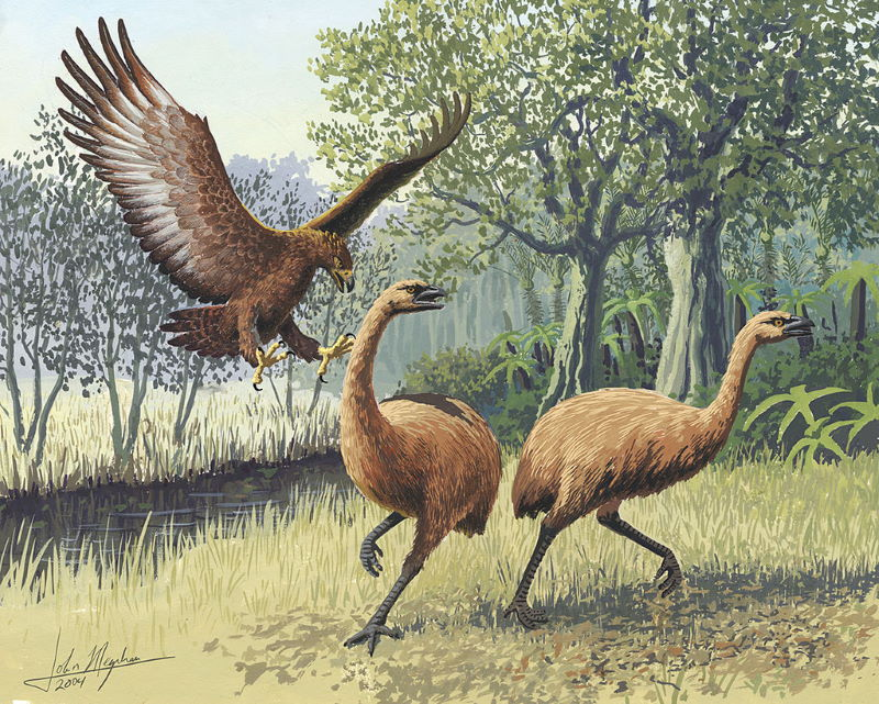 Harpagornis haast arend