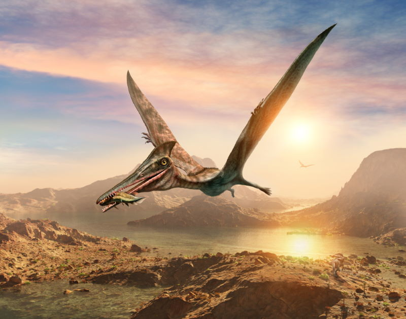 Pterodactylus