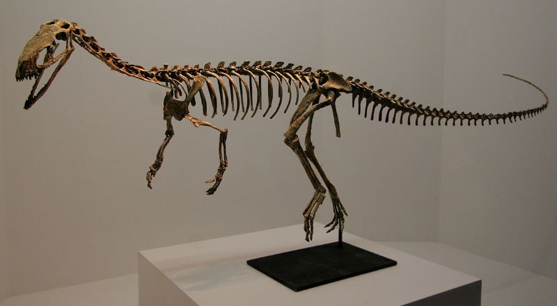 Eodromaeus skelet