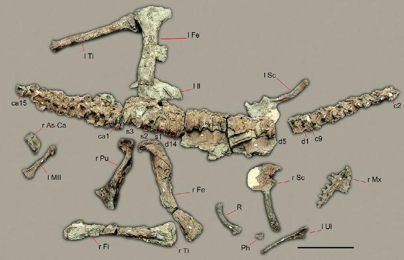 Sanjuansaurus botten