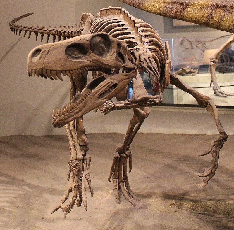 herreasaurus skelet