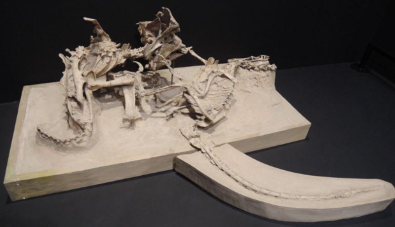 fossieel velociraptor