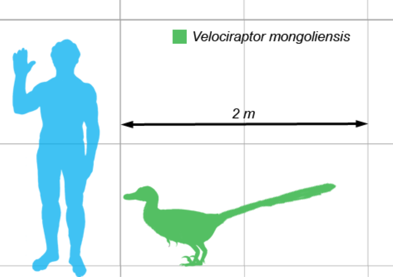 grootte van velociraptor