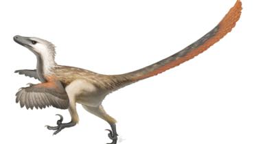 velociraptor met veren