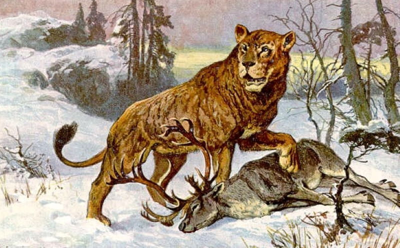 holenwolf