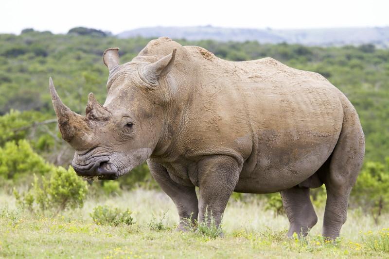 grootste dier ter wereld
