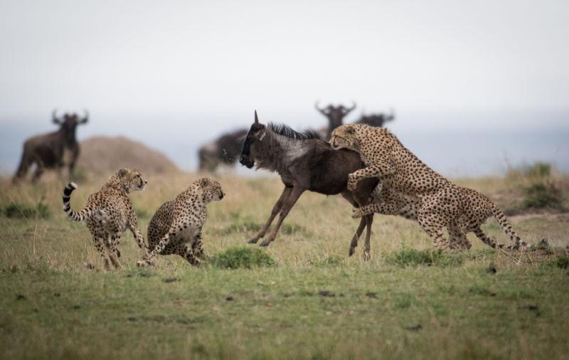 mannetjes leven in groepen
