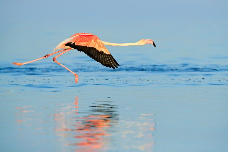 Kleine flamingo 2