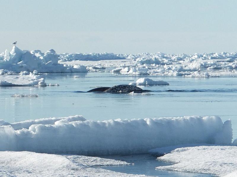 onder het ijs