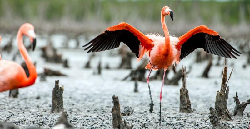 rode flamingo 2