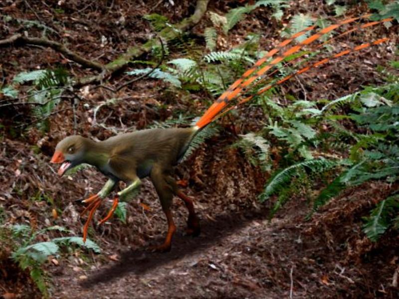 Epidexipteryx hui 2